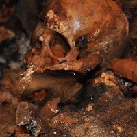 Resti ossei museo Diocesano - Ugento